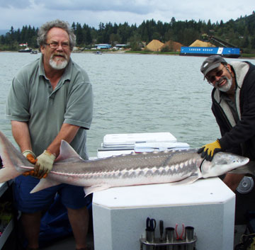 Fraser River sturgeon fishing guide photos